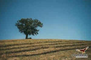 foto - Calciano - Basilicata