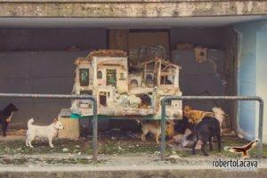foto - Francavilla sul Sinni - Basilicata